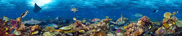 unterwasserkamera-koralenriff