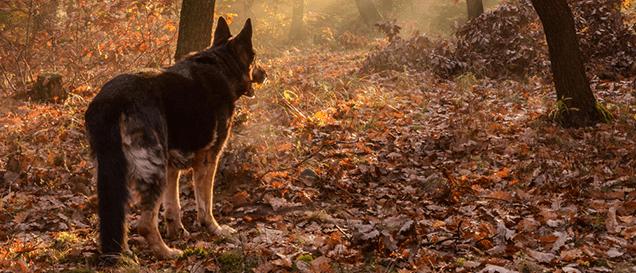 wildkamera-wolf