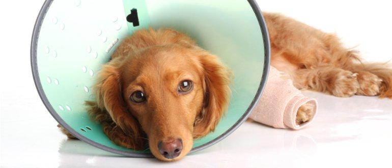 hunde-op-versicherung test