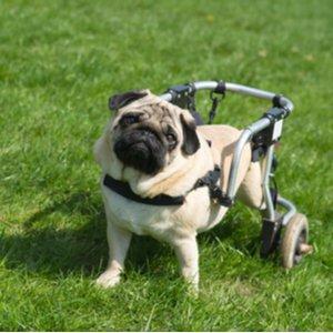 Hund, der dank Hunde-OP-Versicherung mit Gehhilfe laufen kann