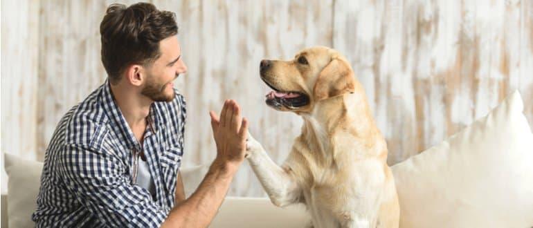 hundehaftpflicht test