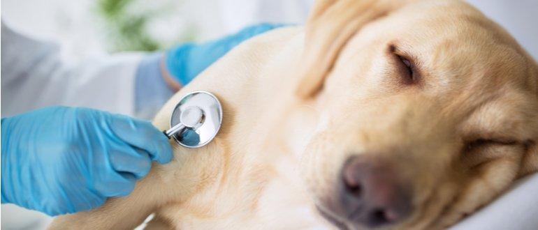 hundekrankenversicherung test