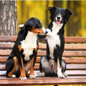 Zwei Hunde auf Parkbank mit Hundehaftpflichtversicherung